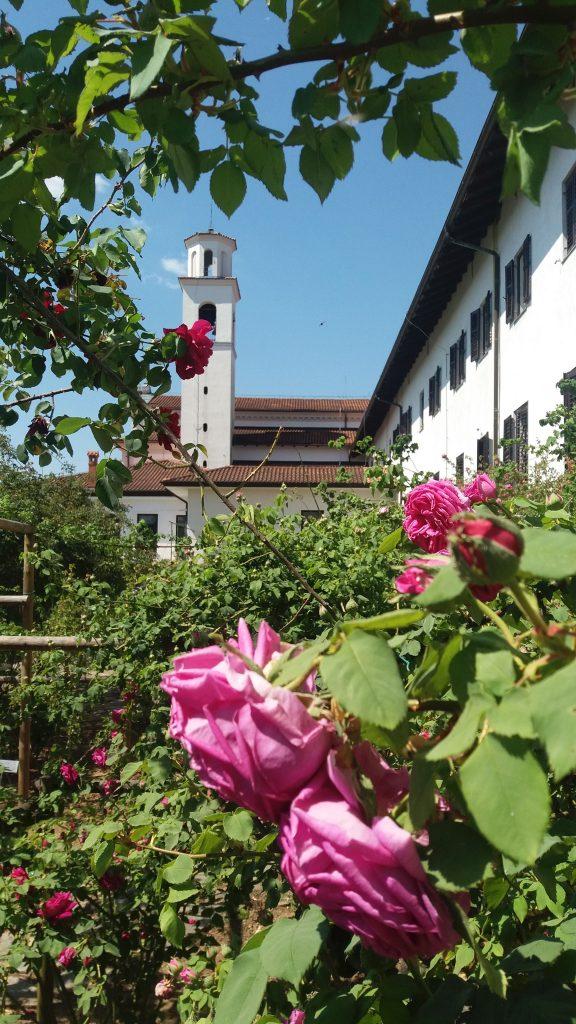 30. Primorski slovenistični dnevi so bili prestavljeni na leto 2021. Kongres bi se dogajal tudi na Kostanjevici nad Novo Gorico. Takole lepe so bile burbonke maja.